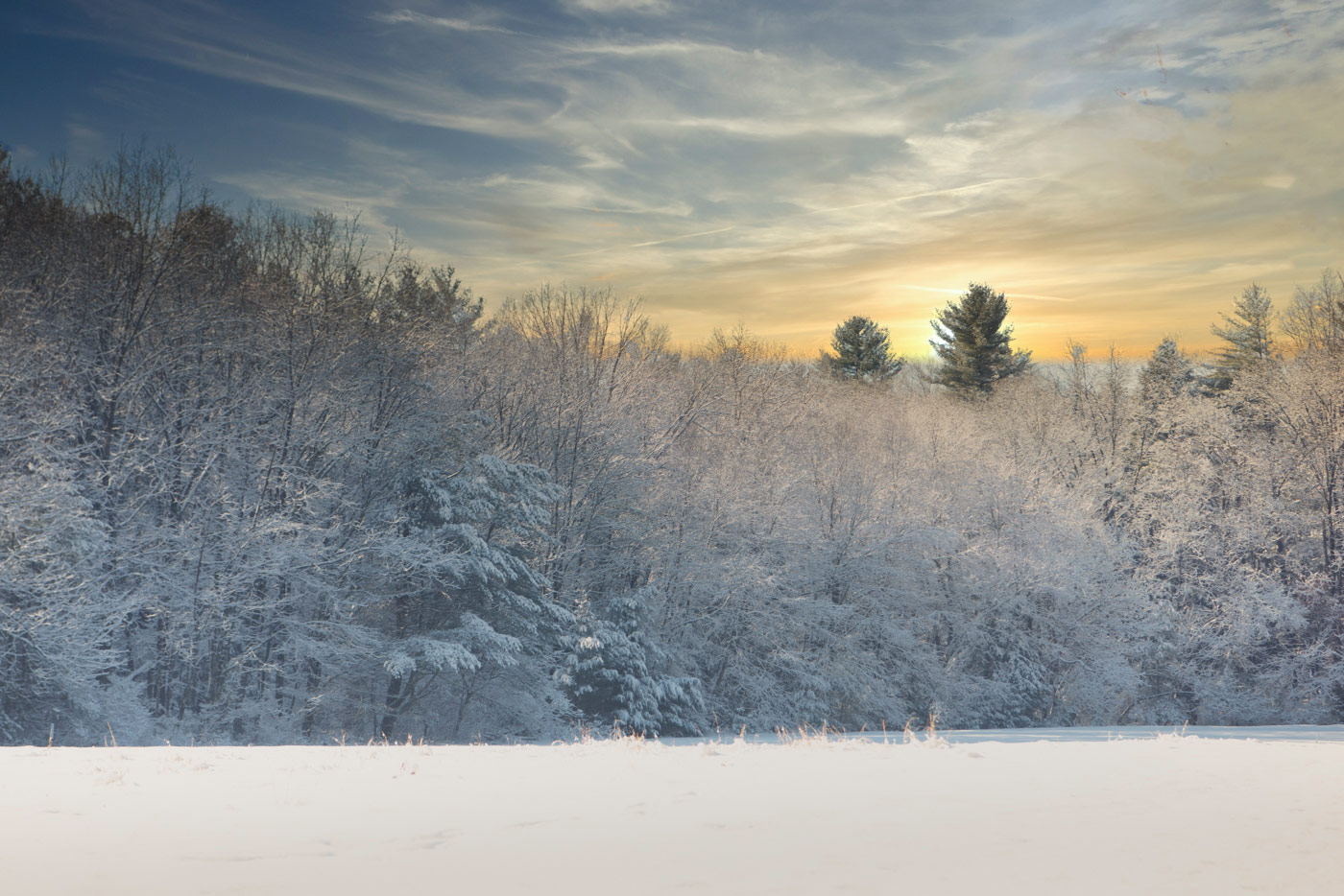 wintery sunrise over snow covered trees