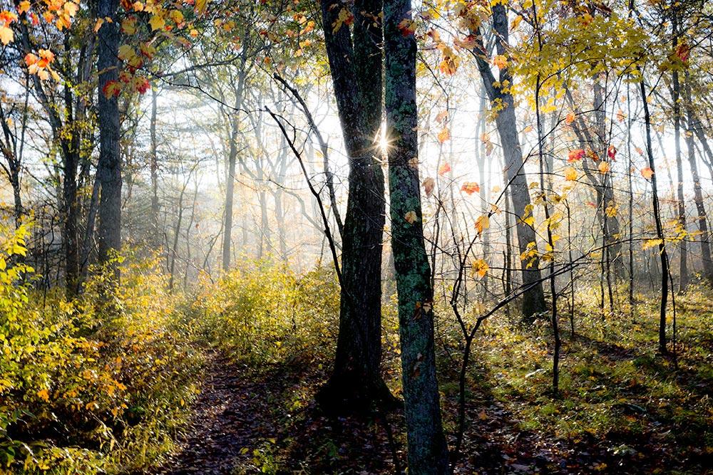 Yellow Trail Autumn Morning