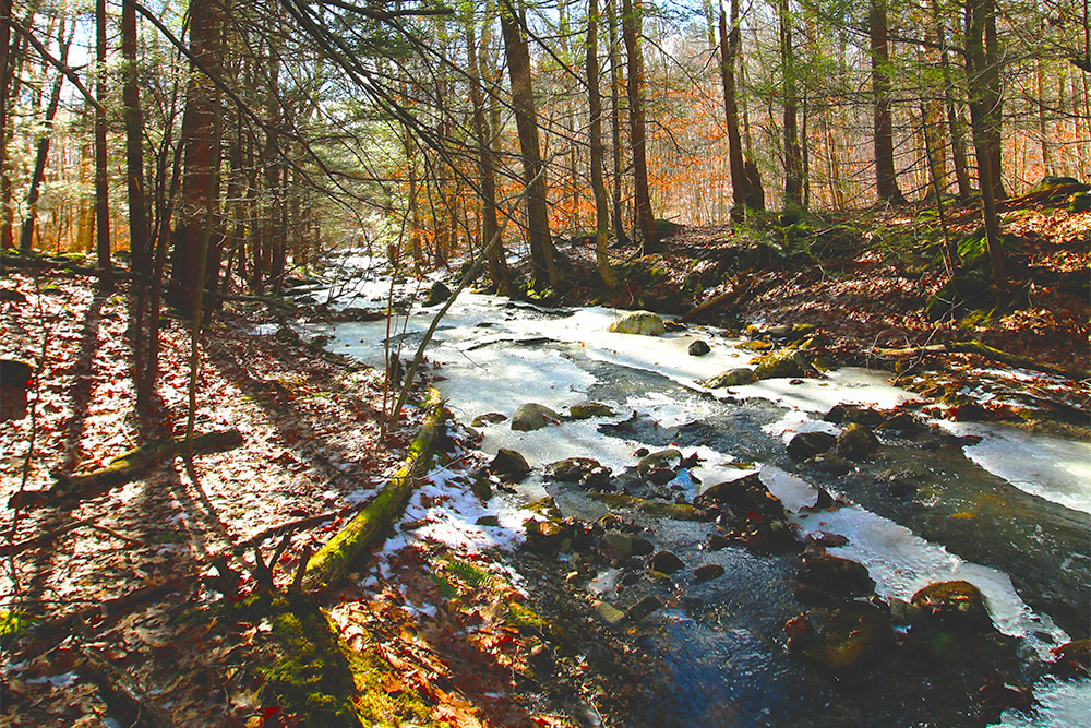 Nickel Mine Brook Trail
