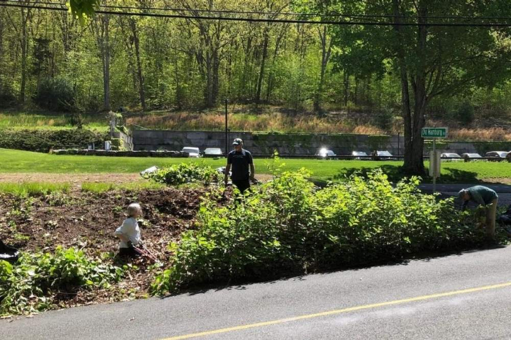 Two people removing knotweed on the side of the road