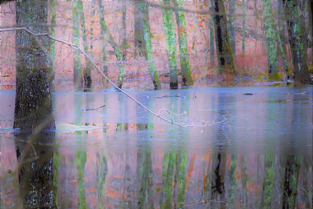 reflections on water at Jewett Preserve in Lyme