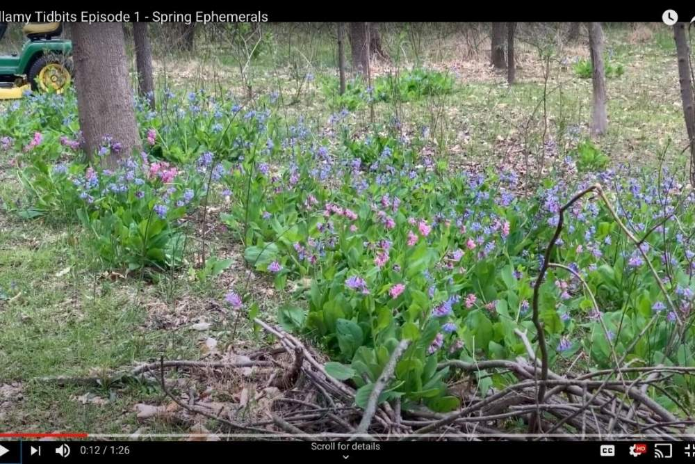 screenshot from a video with field of flowers